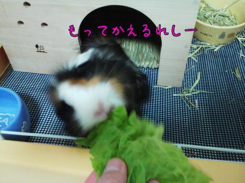 梅お迎え記念日4