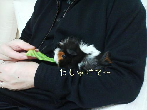 梅お迎え記念日3
