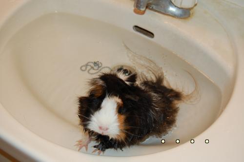 お風呂梅ちゃん2