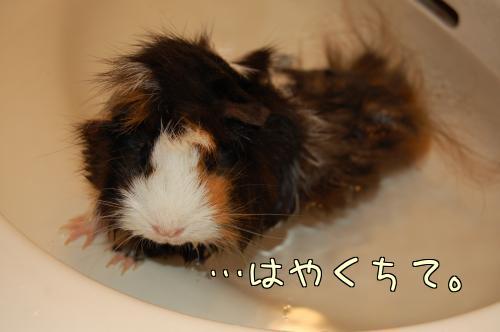お風呂梅ちゃん3