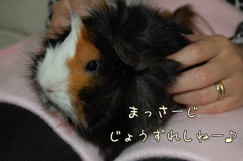 接待梅ちゃん4