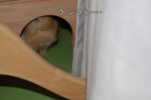 部屋んぽトイレPartⅡ5
