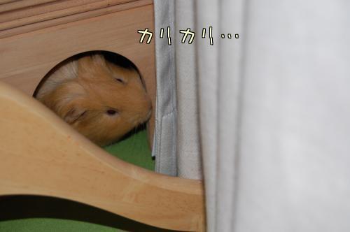 部屋んぽトイレPartⅡ4