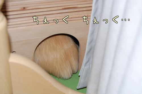 部屋んぽトイレPartⅡ3