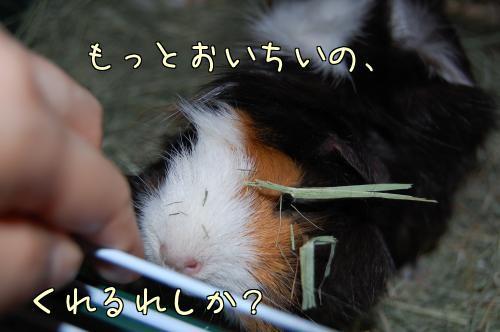 牧草梅ちゃん10