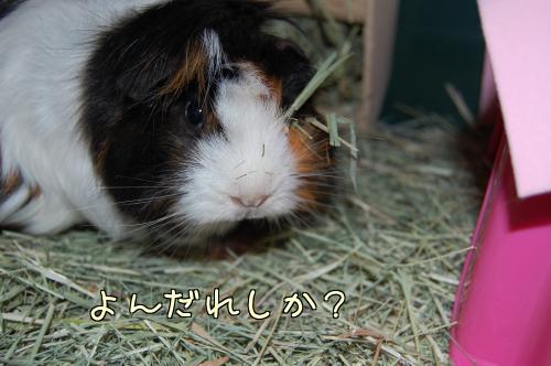 牧草梅ちゃん9