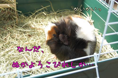 日光浴☆梅ちゃん編4