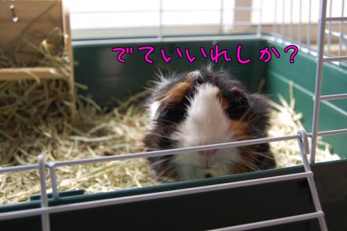 日光浴☆梅ちゃん編2