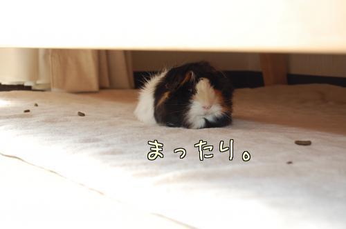 日光浴☆梅ちゃん編11