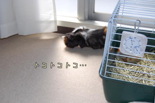 日光浴☆梅ちゃん編7