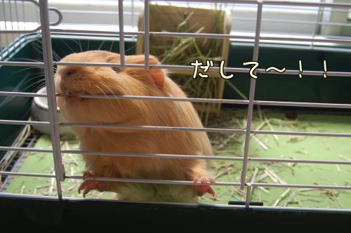 日光浴☆ハル編2