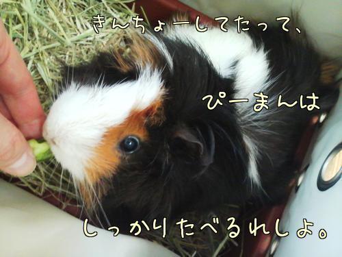足裏タコさん10