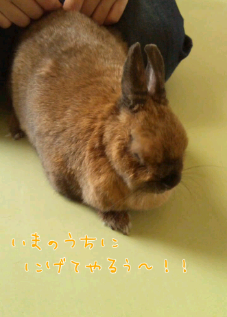 iphone_20120228233329.png
