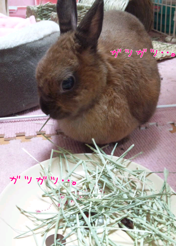 iphone_20120323212521.png