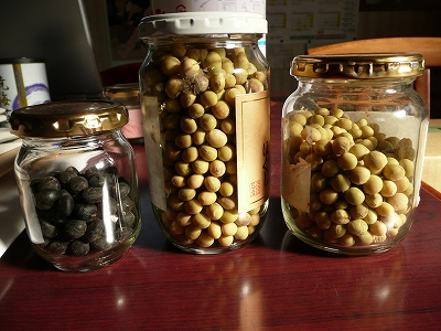 今年種として使う大豆たち