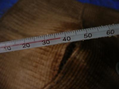 一次発酵開始8日後の温度
