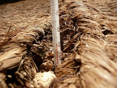 ボカシ肥料をちょっとだけ高く積んでみた後の温度