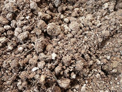 乾燥中のボカシ肥料・ズーム