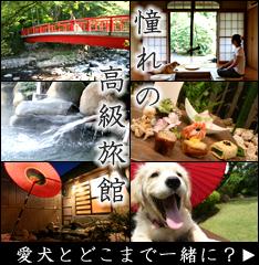 愛犬と楽しむ温泉旅館 伊豆修善寺 絆