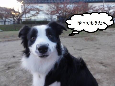 DSC08985.jpg