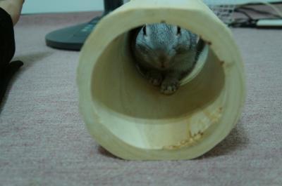 らびぃトンネル3