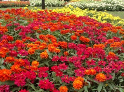 S20141031山下公園の花々
