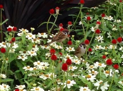 S20141031山下公園の雀