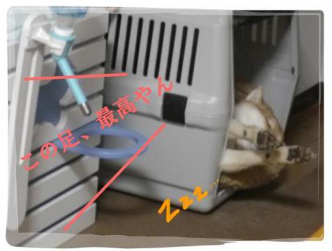 蟇晉嶌_convert_20120203022752[1]