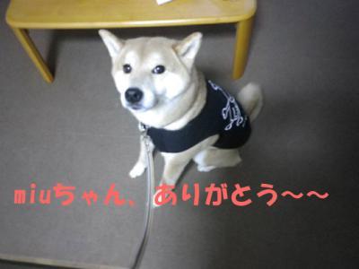 マコメグ堂5