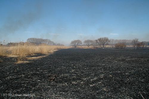 野焼きの跡(昨年)