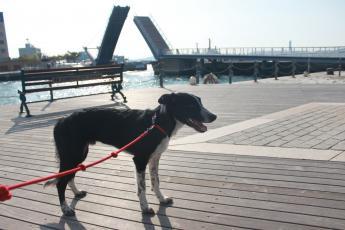 門司港の橋とザッ君