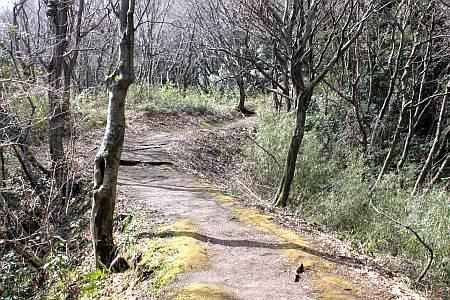 丘陵の道2