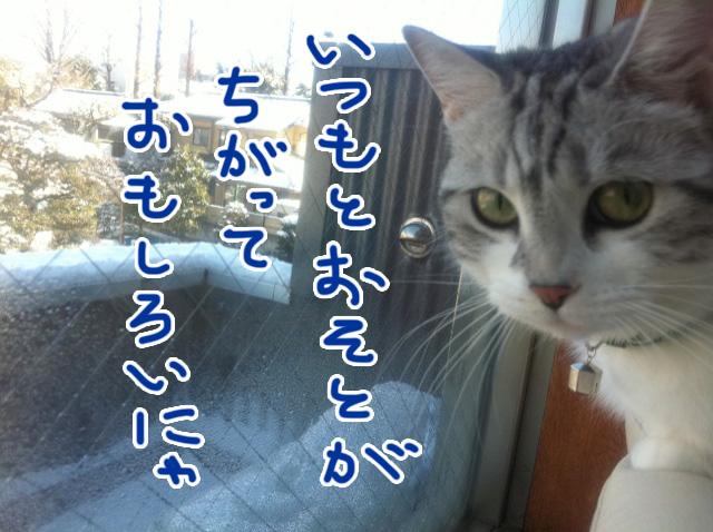 雪の日の文蔵2012