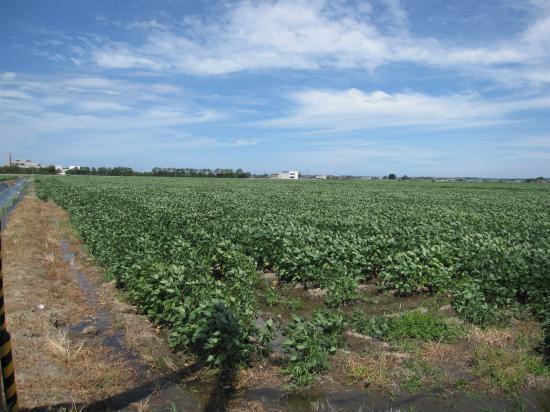 小豆畑2012.08.28