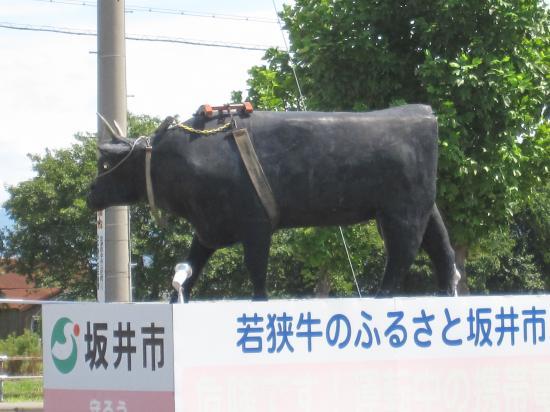 福井牛20128.28