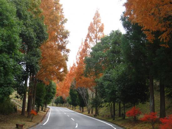 2012.11.29三重県5