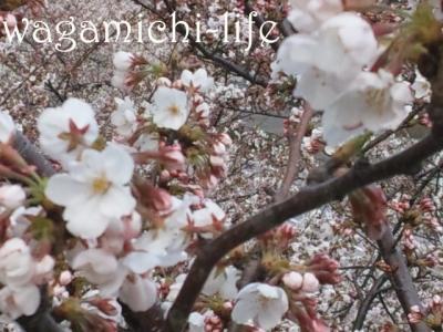 DSC_0347_convert_20120407192127.jpg