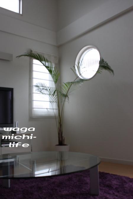 IMG_3824_convert_20120223113708.jpg