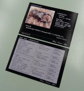 プレ2012証明書1