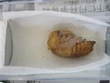 人工蛹室2