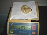 久留米幼虫34.7g