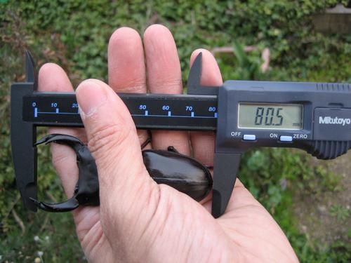 2009年久留米80.5mm1