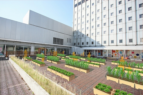 屋上菜園vol2