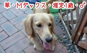 犬恋文timgd65346