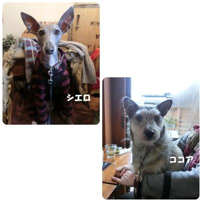 2014-2-6.jpg