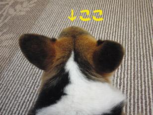 110928-1.jpg
