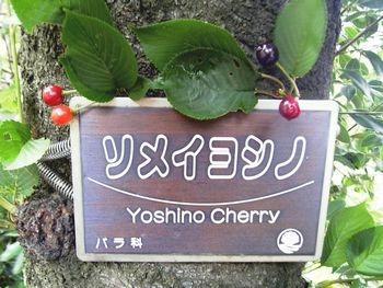 cherry (6)