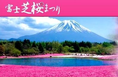 富士芝桜まつりk