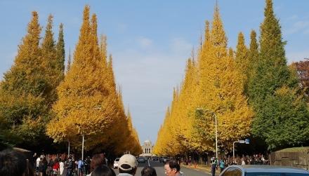 いちょう祭り2009 (1)