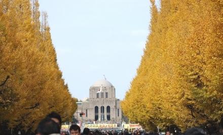 いちょう祭り2009 (14)